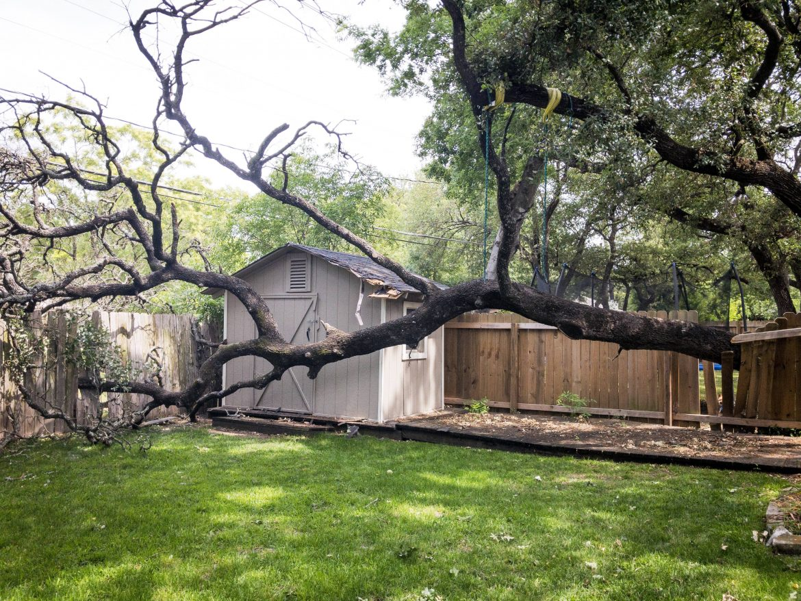 Tree Vs. Fence: The Tree Always Wins